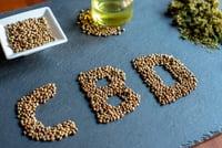 Graine de cannabis - CBD